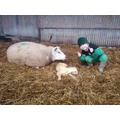 Lambing.