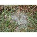 Finding cobwebs.