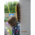 Finding a caterpillar!