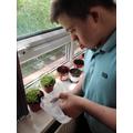 the seedlings.