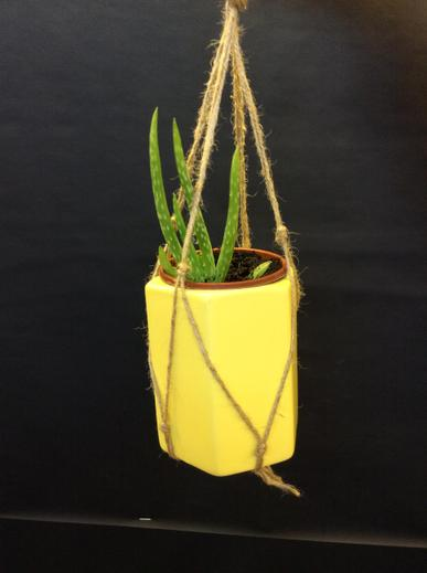 Plant, Pot and Hanger £5