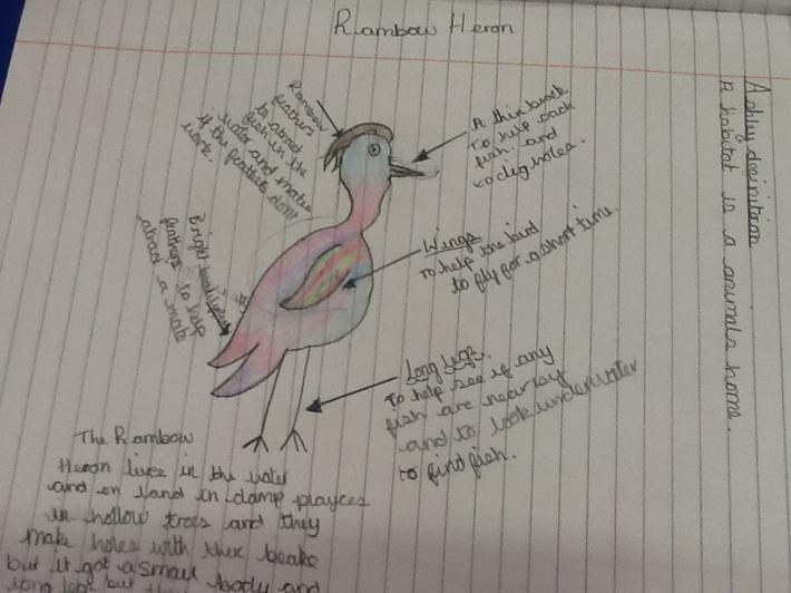 This is the rainbow heron by Ashley
