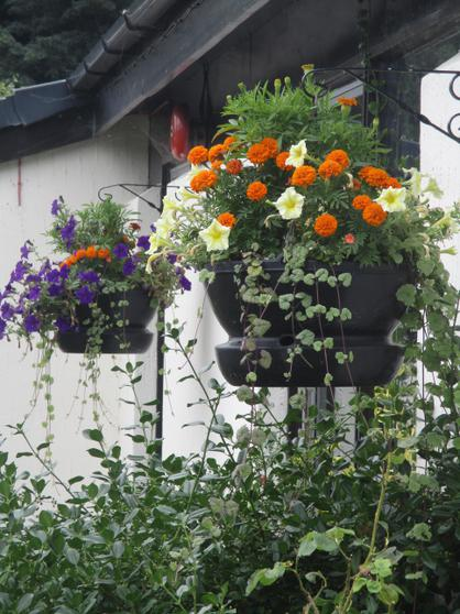 Beautiful hanging baskets planted with Jim