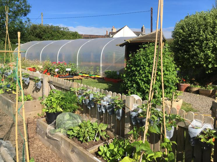 The Garden and Polytunnel