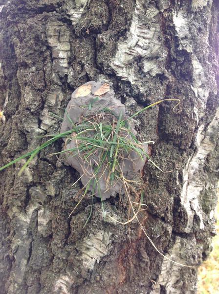 Clay boggot