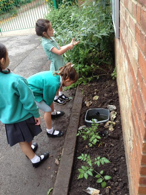 Creating a pond for our local wildlife!