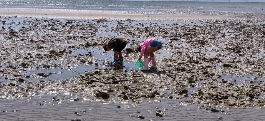 Finding crabs at the beach, wonderful Jude!