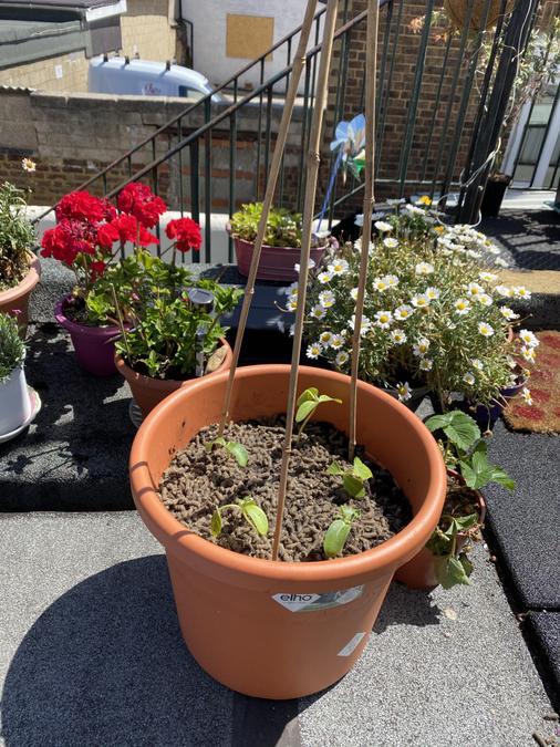 Mahdi's super garden.