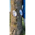 This tree looks like it needs a hug ( Nathaniel)