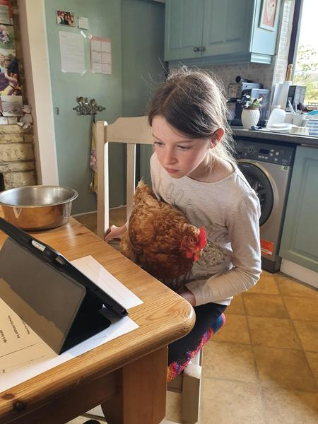 Do chickens help with home learning?