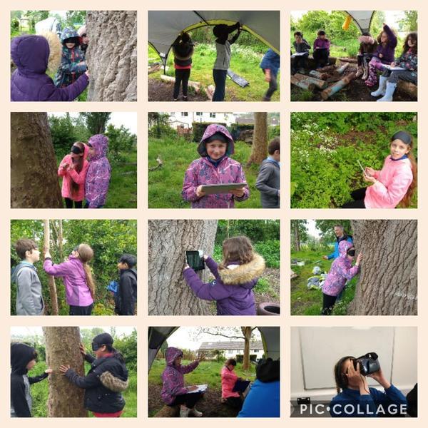 Tree Council visit