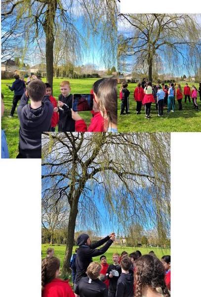Y6 Tree Trail