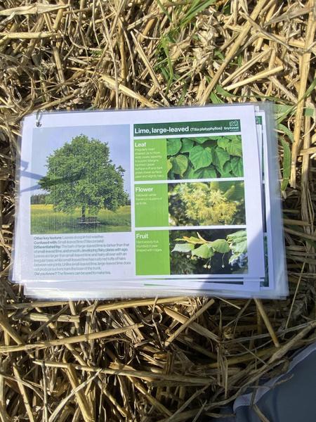 Checking tree identification