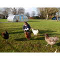 Archie (Year 1) read to the school chickens!