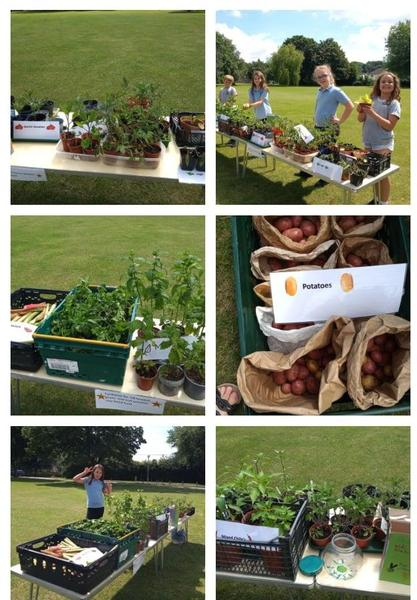Plant and produce sale
