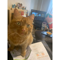Zach's unhelpful table partner Leo, who keeps lounging on the keyboard and worksheets!