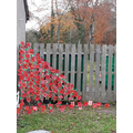 Come and see our poppy cascade