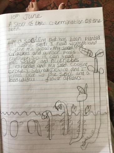 Katie's germination explanation piece