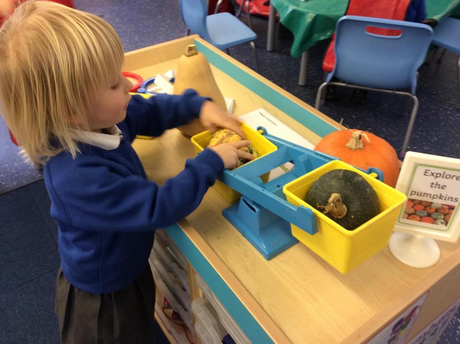 Investigating pumpkins.