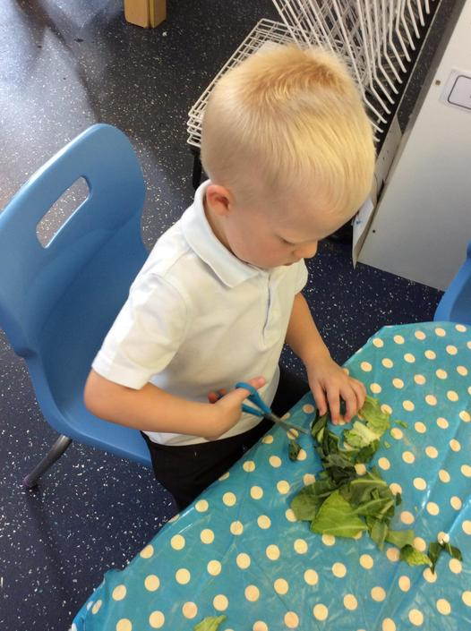 Cutting skills with herbs.