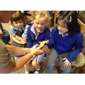 Meeting the brown rat
