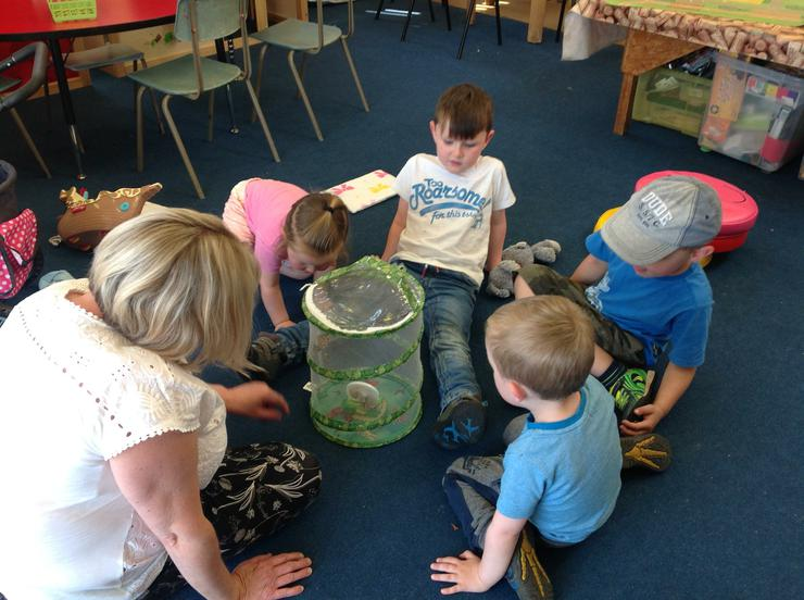 Our caterpillars have now turned into butterflies