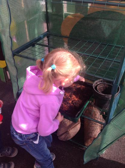 The children put the Cress in the green house
