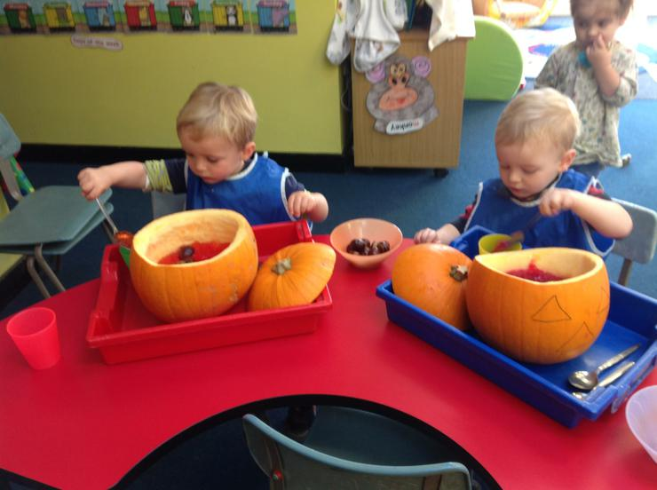 The harvested pumpkins have been scooped out