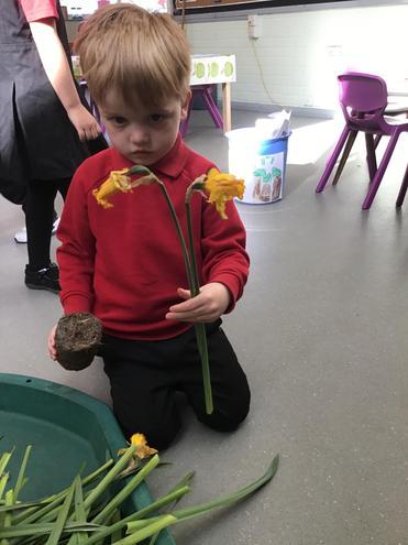 Exploring parts of a plant