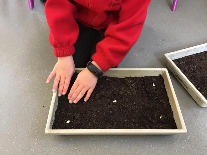 Maths with seeds