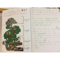 Year 2 - Rainforest layers and animal adaptation