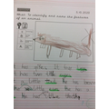 Year 1 - Identifying the features of animals
