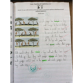 Year 6 - Explaining inheritance and natural selection