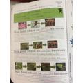 Year 2 - Rainforest food chains