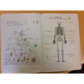 Year 3 - Balanced diets and the skeleton