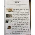 Year 6 - Learning how fossils provide us with information about species from the past