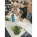 Willow class have been completing observational drawings inspired by John Millais.
