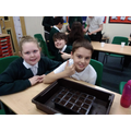 Planting our herb gardens