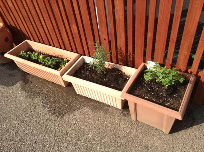 Rosemary, Lavender, Thyme, Mint and Violas!