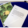 Evie has written a report about bees