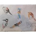 Olivia drew some great bird pictures!