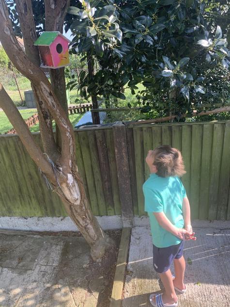 Seth's wonderful bird house he has painted himself