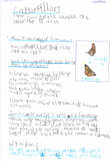 Tyler's fantastic report about caterpillars