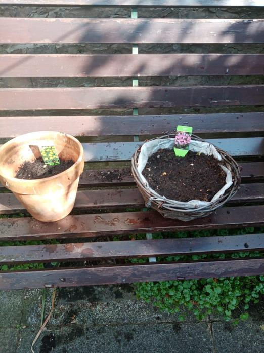 Mrs Marlow is looking after our seeds and bulbs.