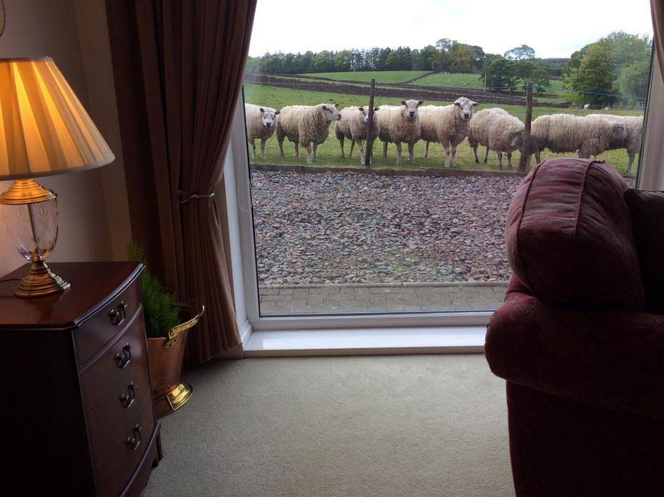 Some sheep looking into my mum's house. BAA