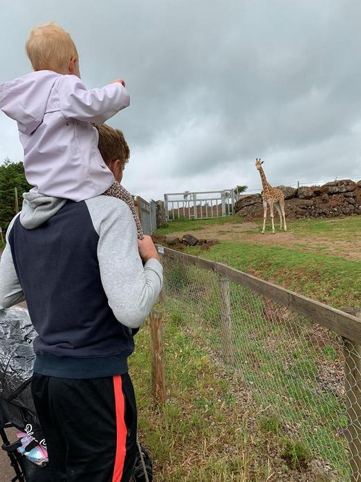 Tall giraffes!