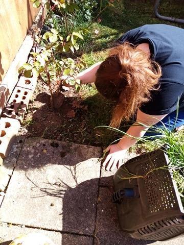 Gardening in the lovely sunshine