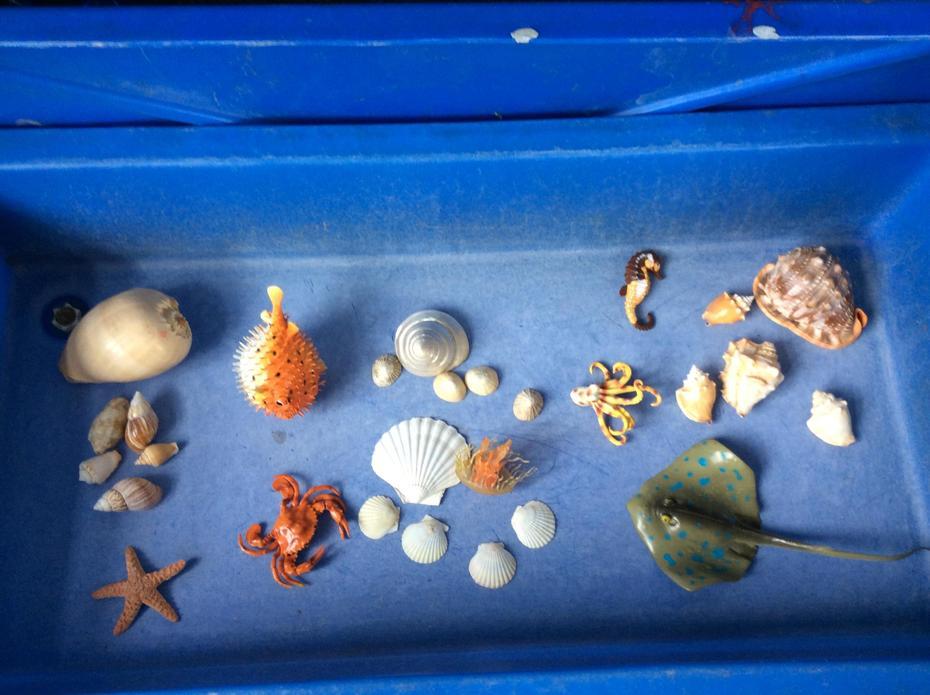 Amazing sea creature small world play.