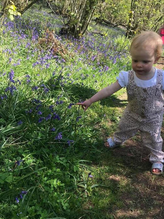 Exploring Bluebell Wood