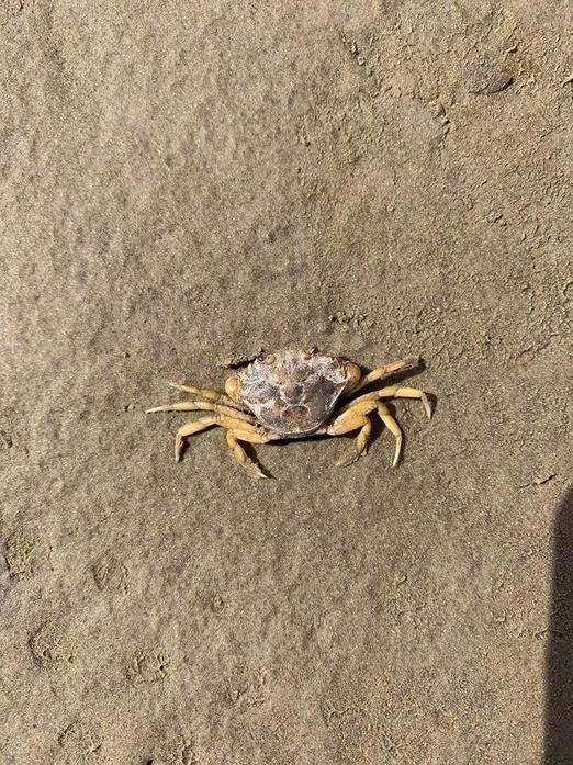 We found a crab on the sand!